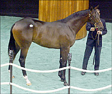 Giant's Causeway Colt Tops Saratoga Sale Session