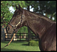 Seattle Slew's Surgery Successful