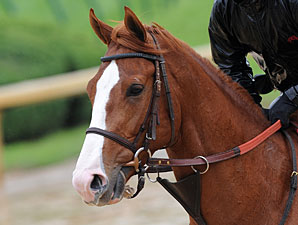 Preakness Runners Arrive In Baltimore