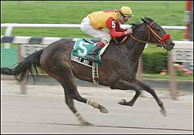 Shawklit Mint Wins 4th Straight in Vagrancy