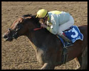 Sprinter Shine Again Stretches Out in Ruffian Handicap