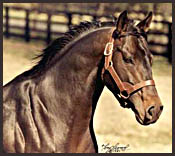 Seattle Slew: Greatness on the Track
