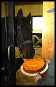 Triple Crown Winner Seattle Slew Celebrates 28th Birthday