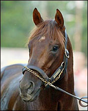 Smarty Jones' Fee Set at $100,000