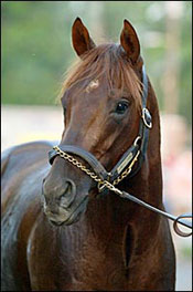 Smarty Jones Reading Room (5/21)