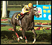 Gulfstream Park Race Report: Mirror Image