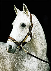 Derby Winner, Horse of the Year Spectacular Bid Dead
