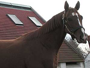 Stallion Video: Corinthian