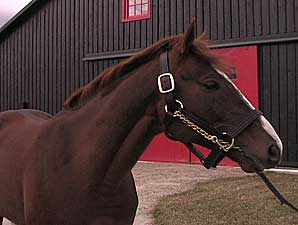 Stallion Video: English Channel