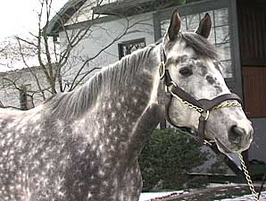 Stallion Video: Flashy Bull