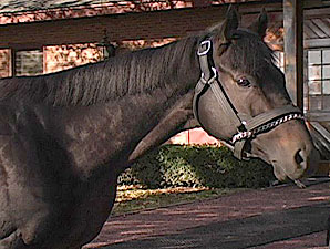 Stallion Video: Seeking the Best
