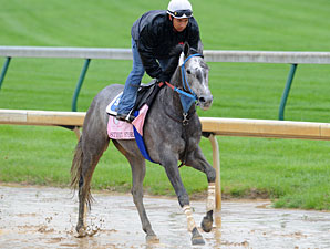 Street Storm jogging at Churchill Downs 5/2/2011.