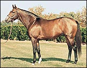 Lane's End Stallion Summer Squall Pensioned