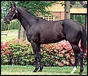 Leading Japanese Sire Sunday Silence in Critical Condition