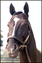 Derby Winner, Top Japanese Sire Sunday Silence Dies