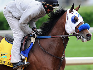 Sway Away Gets His Chance in Preakness