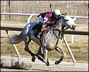 Tapit Works 7 Furlongs Between Races at Laurel