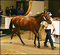 Diesis Colt Breaks Tattersalls October Mark