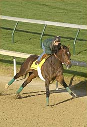 Steve Haskin's Kentucky Derby Report: Baffert Goes Solo As Duo Works