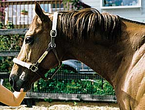 Washington Stallion Tribunal Dead