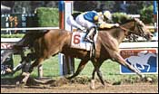 Grade I Winner Unshaded Injured, Retired