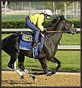 Preakness Contenders in Final Workouts