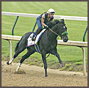 War Emblem Breezes at Churchill in First Post-Preakness Work