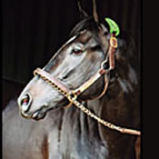 War Emblem Bonus Settled by Thoroughbred Corp., Reineman