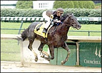 Wild and Wicked is Favorite for Ohio Derby