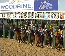Woodbine Debuts New Polytrack Surface