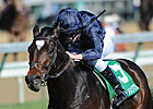 Strong Coolmore Team Headed to Dubai