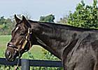 First Foal for Grade II Winner Zanjero