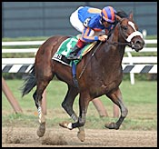 Juveniles Gear Up For Saturday Stakes; Squirtle Squirt's Status Unknown