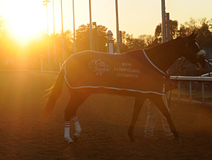 Zenyatta walks to the saddling paddock for the 2010 Breeders' Cup Classic.