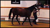 Zibilene Sells For More Than $2 Million At Tattersalls