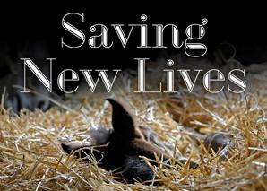 Saving New Lives