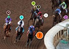 2014 Breeders' Cup Classic Race Sequence