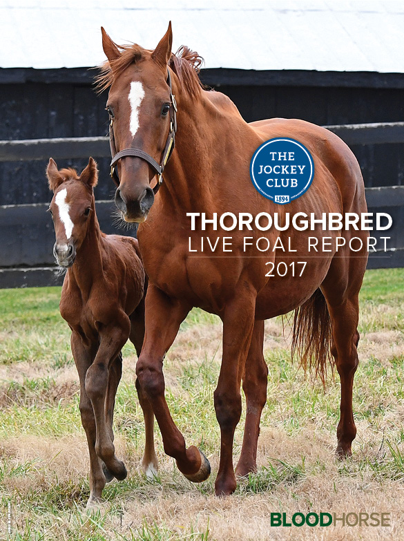 2017 Thoroughbred Live Foal Report