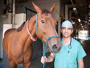 Drug Offers Hope in Laminitis Fight