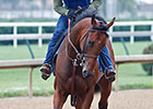 American Pharoah Jogs One Mile at Churchill
