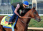Favored American Pharoah Draws Post 18