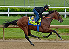 American Pharoah Has Lone Churchill Breeze