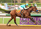 American Pharoah Easy Winner of FrontRunner