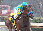 American Pharoah Pointed to Arkansas Derby