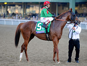 Animal Kingdom on Course for 2013 Campaign