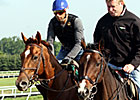 Animal Kingdom Gallops Again at Fair Hill
