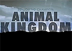 Animal Kingdom - An Insiders Perspective