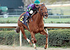Arienza, St. John's River Head Late Oaks Noms