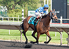 Aurelia's Belle Takes Arlington Oaks