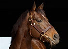 Awesome Again Returns to Adena Springs